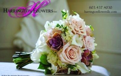Harrington Flowers